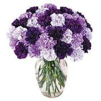 flowers/by-type/carnations-flower