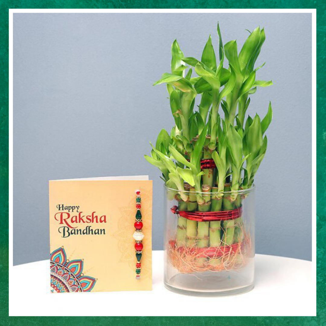 Lucky Bamboo and Rakhi gift Combo