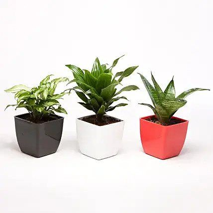 Set of 3 Green Plants in Plastic Pots
